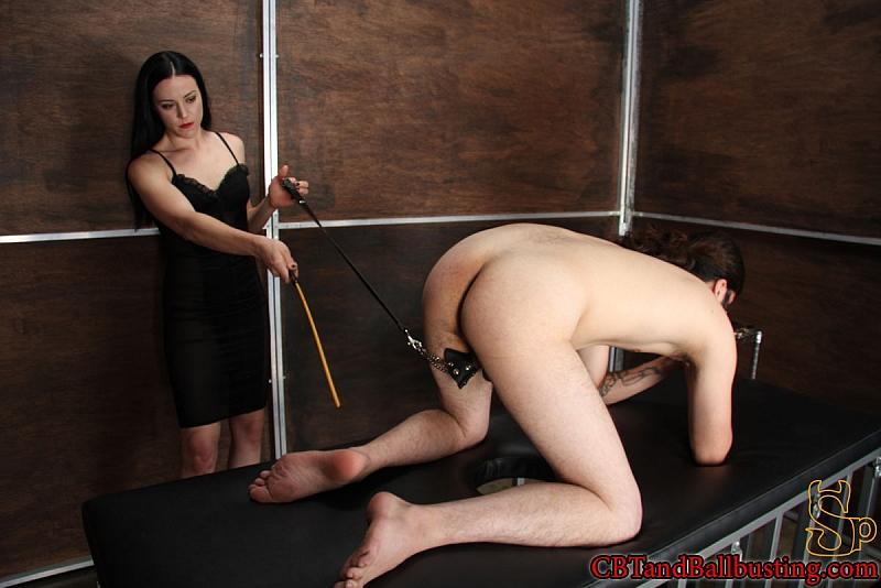 erotik massage stuttgart femdom cbt